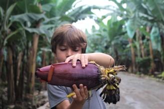 Flor del Banano.