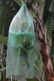 Proteccion del Banano.